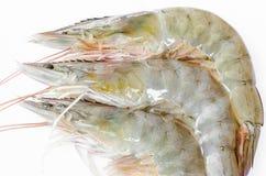 ζήστε γαρίδες Στοκ Φωτογραφίες