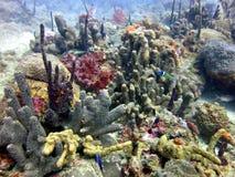 Ζήστε κοραλλιογενής ύφαλος Στοκ φωτογραφίες με δικαίωμα ελεύθερης χρήσης