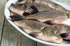 Ζήστε κυπρίνος στο πιάτο ποταμών Στοκ Φωτογραφίες