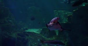 Ζήστε Saltwater ενυδρείων ψάρια φιλμ μικρού μήκους