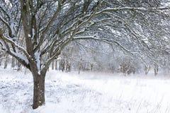 Ζαλίζοντας δασική χειμερινή σκηνή χιονιού στοκ φωτογραφία με δικαίωμα ελεύθερης χρήσης
