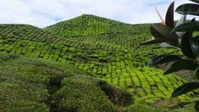 Ζαλίζοντας φυτεία τσαγιού της Μαλαισίας Χάιλαντς του Cameron Στοκ εικόνες με δικαίωμα ελεύθερης χρήσης