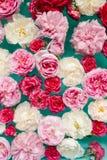 Ζαλίζοντας floral σύσταση των ζωηρόχρωμων τριαντάφυλλων στο νερό στο μπλε υπόβαθρο στοκ φωτογραφίες με δικαίωμα ελεύθερης χρήσης