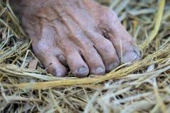 Ζαρωμένα πόδια στοκ εικόνα με δικαίωμα ελεύθερης χρήσης