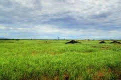 ζαχαροκάλαμο εδάφους &kapp στοκ φωτογραφίες με δικαίωμα ελεύθερης χρήσης