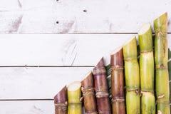 Ζαχαροκάλαμο και πράσινος στενός επάνω φύλλων Στοκ Φωτογραφίες