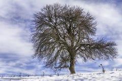 Ζαλίζοντας δέντρο Στοκ φωτογραφίες με δικαίωμα ελεύθερης χρήσης