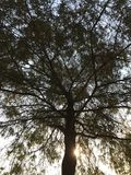 Ζαλίζοντας δέντρο Στοκ Εικόνα