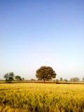 Ζαλίζοντας σκηνή βραδιού του πράσινου καλλιεργήσιμου εδάφους στοκ εικόνες με δικαίωμα ελεύθερης χρήσης