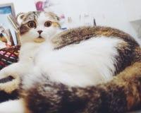 Ζαλίστε τη γάτα Στοκ Φωτογραφία