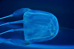 ζελατίνα ψαριών κιβωτίων Στοκ εικόνα με δικαίωμα ελεύθερης χρήσης