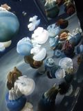 Ζελατίνες στη σίτιση της δεξαμενής Στοκ Εικόνα