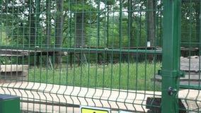 Ζευγάρι της καφετιάς αρκούδας στο κλουβί αιχμαλωσίας ζωολογικών κήπων απόθεμα βίντεο