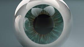 Ζευγάρι του ανθρώπινου ματιού διανυσματική απεικόνιση