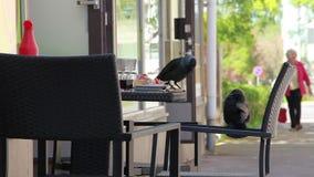 Ζευγάρι του μεσημεριανού γεύματος καργών στον καφέ απόθεμα βίντεο