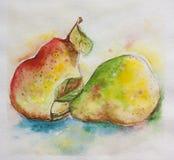 Ζευγάρι του watercolor αχλαδιών Στοκ φωτογραφία με δικαίωμα ελεύθερης χρήσης