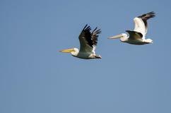Ζευγάρι των αμερικανικών άσπρων πελεκάνων που πετούν σε έναν μπλε ουρανό Στοκ Φωτογραφίες