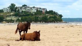 Ζευγάρι των αλόγων στην παραλία φιλμ μικρού μήκους