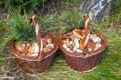 Ζευγάρι των ψάθινων καλαθιών με τα μανιτάρια Στοκ εικόνες με δικαίωμα ελεύθερης χρήσης