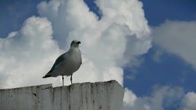 Ζευγάρι Seagulls σε έναν πυλώνα Campeche Μεξικό απόθεμα βίντεο