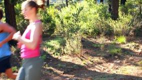 Ζευγών χαμόγελου σε ένα δάσος απόθεμα βίντεο