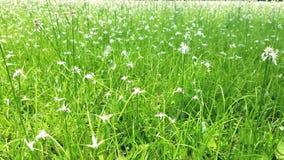 Ζεύγη των λουλουδιών Στοκ Φωτογραφίες