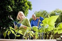 Ζεύγος που εργάζεται στο φυτικό κήπο στο κατώφλι Στοκ εικόνα με δικαίωμα ελεύθερης χρήσης