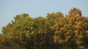 Ζεύγος που περπατά ενάντια στα δέντρα απόθεμα βίντεο