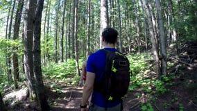 Ζεύγος που περπατά μέσω δασικό 4k απόθεμα βίντεο