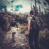 Ζεύγος που περπατά σε ένα δάσος στοκ εικόνα με δικαίωμα ελεύθερης χρήσης