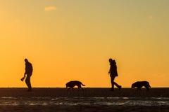 Ζεύγος που περπατά τα σκυλιά τους στην παραλία στο ηλιοβασίλεμα Στοκ Εικόνες