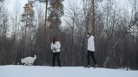 Ζεύγος που ρίχνει τη σφαίρα για το σκυλί απόθεμα βίντεο