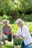 Ζεύγος που συμμετέχεται στην κηπουρική Στοκ εικόνα με δικαίωμα ελεύθερης χρήσης