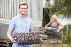 Ζεύγος που φυτεύει τα σπορόφυτα στο οργανικό αγρόκτημα Στοκ φωτογραφίες με δικαίωμα ελεύθερης χρήσης