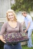 Ζεύγος που φυτεύει τα σπορόφυτα στο οργανικό αγρόκτημα Στοκ Φωτογραφία
