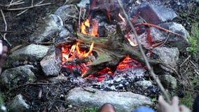 Ζεύγος που ψήνει marshmallows στην πυρά προσκόπων στο κρύο δάσος απόθεμα βίντεο