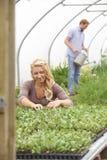 Ζεύγος στο θερμοκήπιο στο οργανικό αγρόκτημα που ελέγχει τις εγκαταστάσεις Στοκ εικόνες με δικαίωμα ελεύθερης χρήσης
