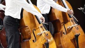 Ζεύγος των μουσικών με τα contrabbass Στοκ Εικόνα