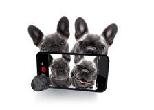 Ζεύγος των σκυλιών selfie στοκ φωτογραφίες