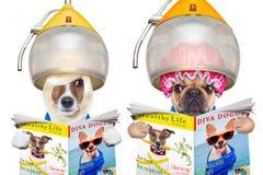 Ζεύγος των σκυλιών στους κομμωτές Στοκ φωτογραφία με δικαίωμα ελεύθερης χρήσης