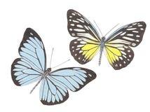 Ζεύγος 2 πεταλούδων Στοκ φωτογραφίες με δικαίωμα ελεύθερης χρήσης