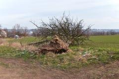 Ζημία θύελλας, πεσμένο δέντρο στοκ εικόνες