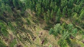 Ζημία θύελλας, δάσος απόθεμα βίντεο