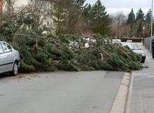 Ζημία θύελλας, πεσμένο δέντρο στοκ φωτογραφία