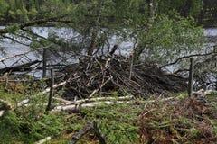 ζημία καστόρων Στοκ φωτογραφίες με δικαίωμα ελεύθερης χρήσης