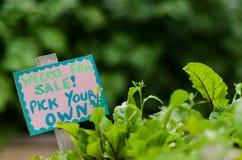 Ζιζάνια για την πώληση - επιλέξτε δικοί σας Στοκ φωτογραφία με δικαίωμα ελεύθερης χρήσης