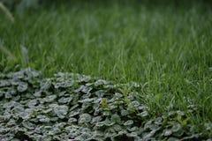 Ζιζάνια στην άκρη του χορτοτάπητα στοκ φωτογραφίες με δικαίωμα ελεύθερης χρήσης