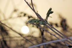 Ζιζάνια στον τομέα στο ηλιοβασίλεμα στοκ φωτογραφίες