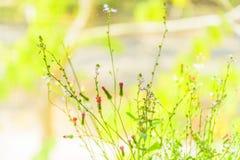 Ζιζάνιο λουλουδιών στο βάζο στην άποψη παραθύρων Στοκ Εικόνες