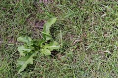 ζιζάνιο σε μια πράσινη τύρφη από άμεσα ανωτέρω στοκ φωτογραφία με δικαίωμα ελεύθερης χρήσης
